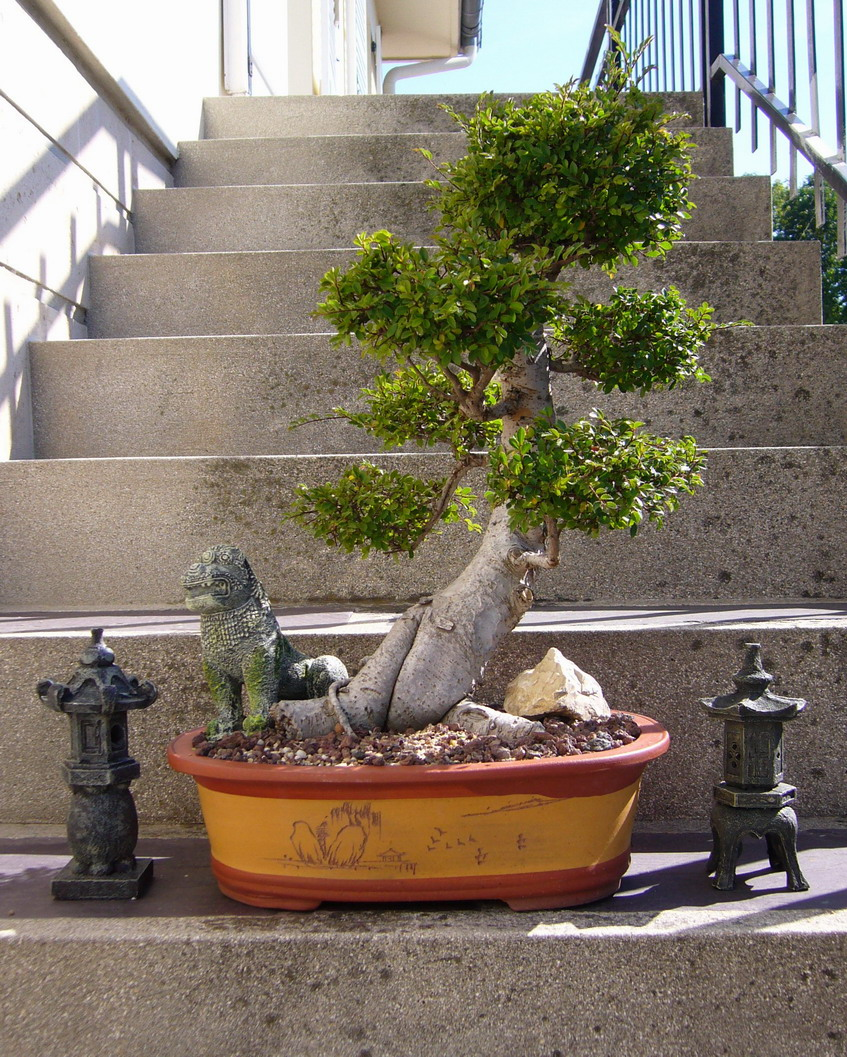 Mot cl bonsa mystic cave - Orme de chine bonsai ...